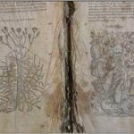 Restauro del libro: stato di conservazione